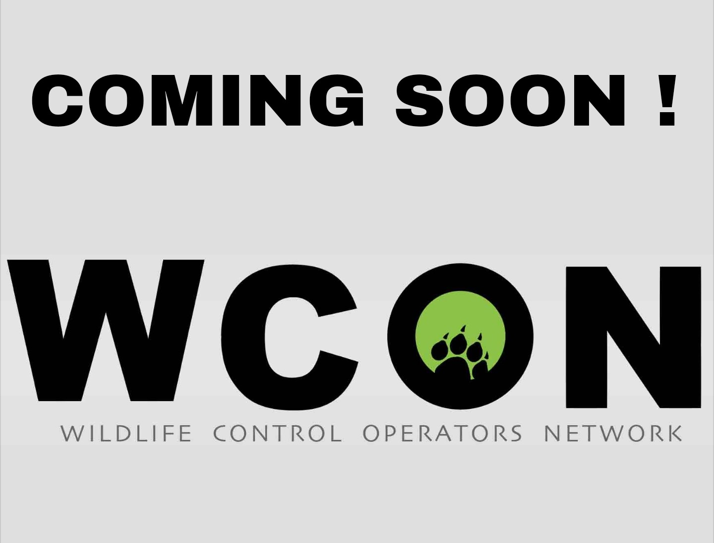 beaver u2013 wcon u2013 wildlife control operators network