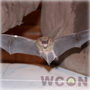 Bat removal - get bats out